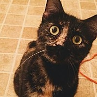 Adopt A Pet :: Autumn - Mission Viejo, CA