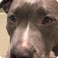 Adopt A Pet :: Rudi 2559 - Columbus, GA