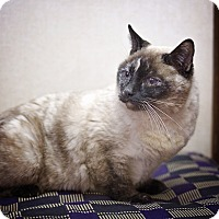 Adopt A Pet :: Snowball - Sterling, KS