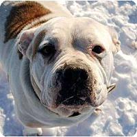 Adopt A Pet :: Bubbles - Kansas City, MO