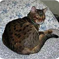 Adopt A Pet :: Tigger and Sheba (m/f PAIR) - Los Angeles, CA