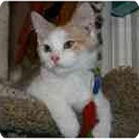 Adopt A Pet :: Beau - Arlington, VA