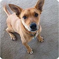 Adopt A Pet :: Dakota - Scottsdale, AZ