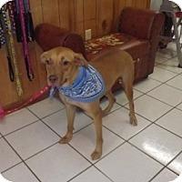 Adopt A Pet :: Cash - Richmond, VA