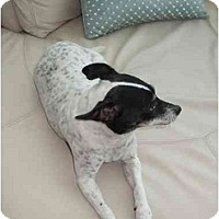 Adopt A Pet :: Princess - Jacksonville, FL
