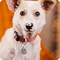 Adopt A Pet :: Roy - Portland, OR