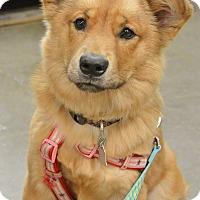 Adopt A Pet :: Bailey - McDonough, GA