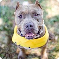 Adopt A Pet :: Jimmy Stewart - Los Angeles, CA
