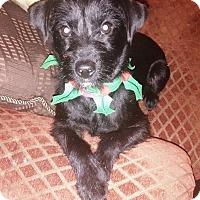 Adopt A Pet :: Sophy - San Diego, CA