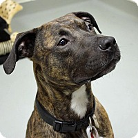Adopt A Pet :: Deuce - Troy, MI
