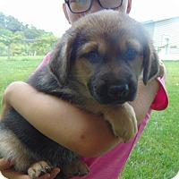 Adopt A Pet :: Natasha - Greeneville, TN