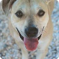 Adopt A Pet :: Lady Gaga - Centerville, GA