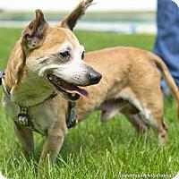 Adopt A Pet :: Matty - Worcester, MA