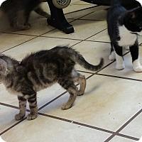 Adopt A Pet :: Emmitt - Chippewa Falls, WI