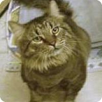 Adopt A Pet :: Chubbs - Las Vegas, NV