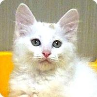 Adopt A Pet :: Casey - Woodland Hills, CA