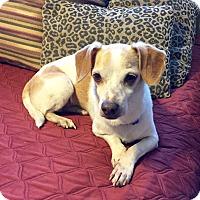 Adopt A Pet :: BENNY - calimesa, CA