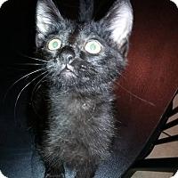 Adopt A Pet :: Bonnie - Bensalem, PA