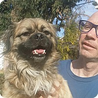 Adopt A Pet :: ARTIE - SO CALIF, CA