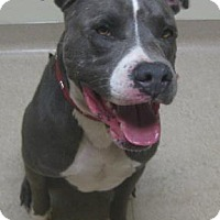 Adopt A Pet :: Jefferson - Gary, IN
