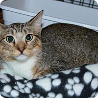 Adopt A Pet :: Peter - Rochester, MN