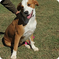 Adopt A Pet :: Misty - Marble Falls, TX
