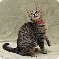 Adopt A Pet :: Tinker - McCormick, SC
