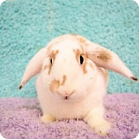 Adopt A Pet :: Caramel - Montclair, CA