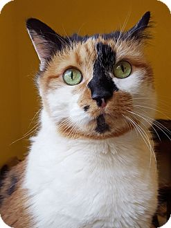 At What Age Can A Cat Be Spayed And Declawed