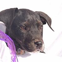Adopt A Pet :: Capricorn - Sparta, NJ