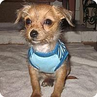 Adopt A Pet :: ELI - Mission Viejo, CA