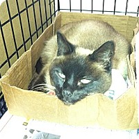Adopt A Pet :: Twila - Whitestone, NY