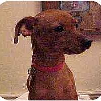 Adopt A Pet :: Zena - Florissant, MO