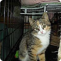 Adopt A Pet :: Amber - CARVER, MA