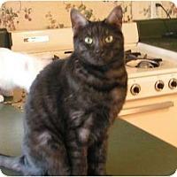 Adopt A Pet :: Nessy Rose - Monroe, GA