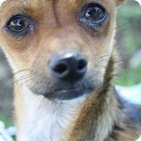 Adopt A Pet :: STYX - Elk Grove, CA