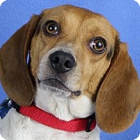 Adopt A Pet :: Tina - Minneapolis, MN