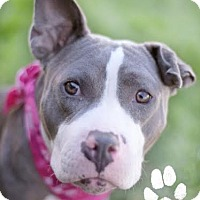 Adopt A Pet :: Jade - Mission Viejo, CA