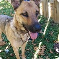 Adopt A Pet :: Layla-adoption pending - Schaumburg, IL