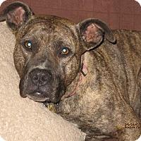 Adopt A Pet :: Deja - Glendale, AZ