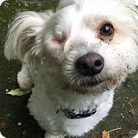 Adopt A Pet :: Patch - San Francisco, CA