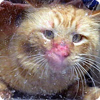 Adopt A Pet :: 286872 - Wildomar, CA