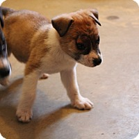 Adopt A Pet :: Willow - Harmony, Glocester, RI