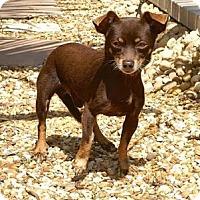 Adopt A Pet :: Benji - Englewood, FL