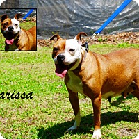 Adopt A Pet :: Larissa - Daleville, AL