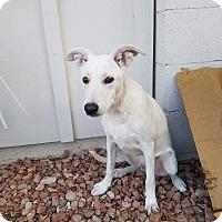 Adopt A Pet :: Comet - Phoenix, AZ