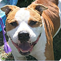 Adopt A Pet :: The Rock - Richland Hills, TX