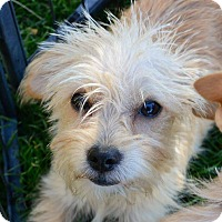 Adopt A Pet :: Princess (puppy) - Meridian, ID