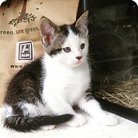 Adopt A Pet :: Tony - Elyria, OH
