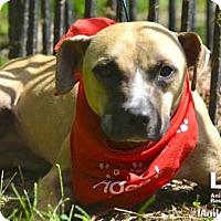 Adopt A Pet :: Katie - Washington, DC